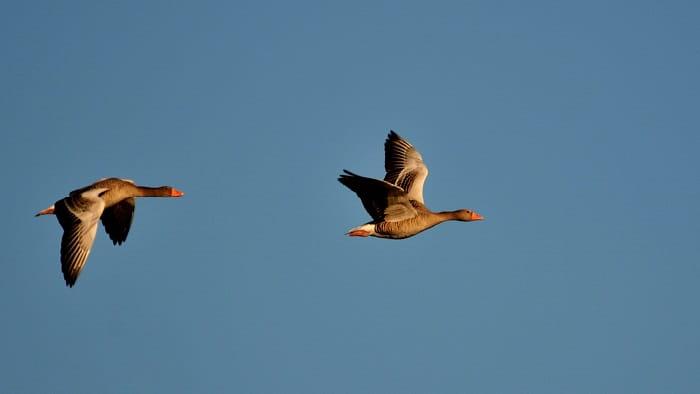 Oplev fuglene